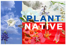 Plant Native Texas Plants