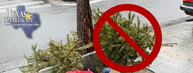 Texas smartscape landscape management program native and adapted oh christmas trees oh christmas trees they dont belong in landfills sciox Choice Image