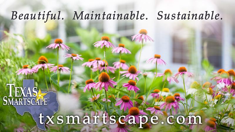 Texas SmartScape Landscape Management Program - Native and