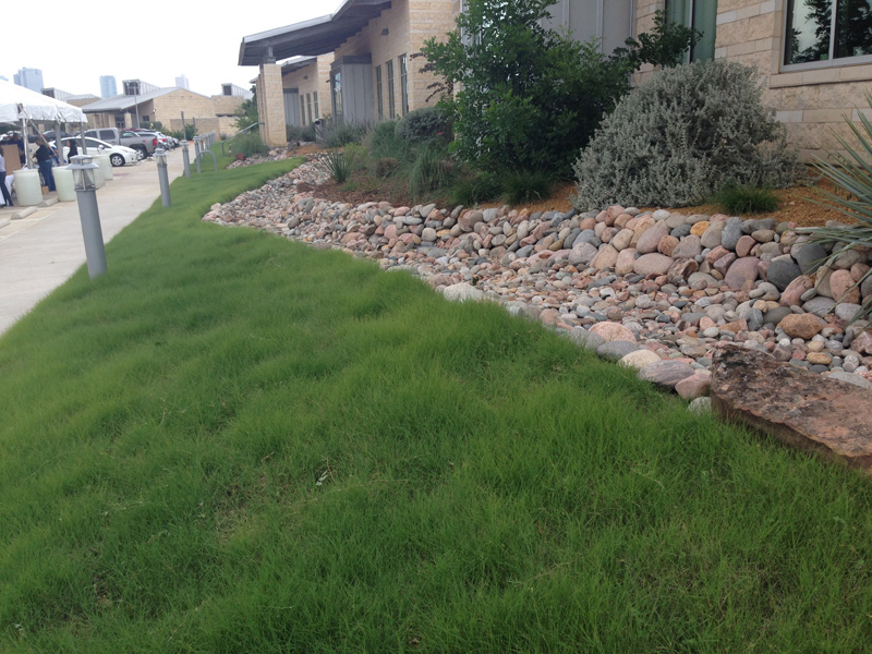 Buffalograss Details - Texas SmartScape Plant Database