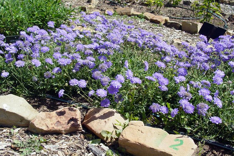 Photo By Texas Tech Horticultural Garden